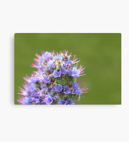 Buzzing about with purple and green Canvas Print