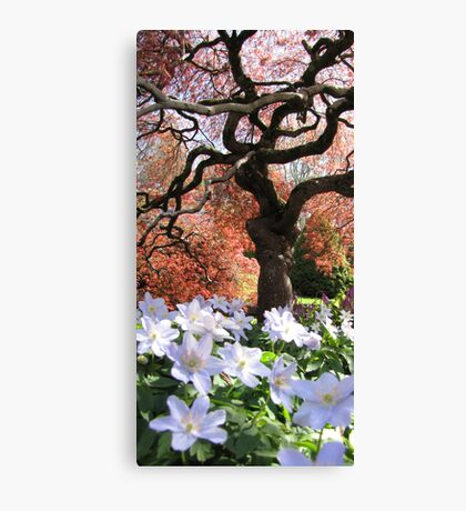 Wise Old Tree Canvas Print