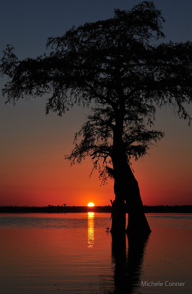 Lake Drummond Canvas by Michele Conner