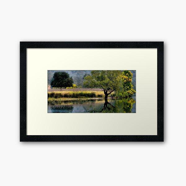 Bedlam Creek Wattle - NSW Australia Framed Art Print