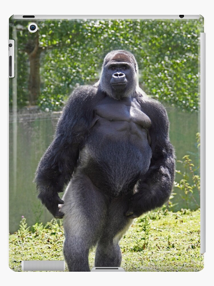 Gorilla standing up - photo#53