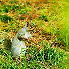 squirrel through the trees by xxnatbxx
