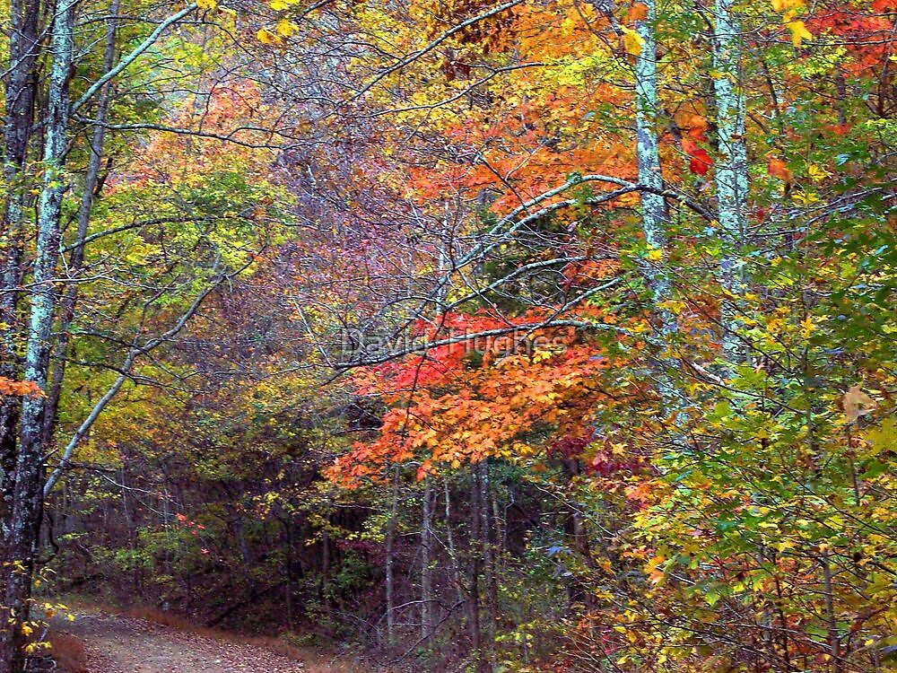 Autumn leaves, Dirt roads of Arkansas by David  Hughes