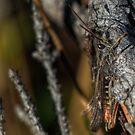 Hiding grasshopper by finnarct