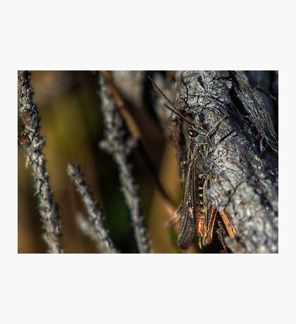 Hiding grasshopper Photographic Print