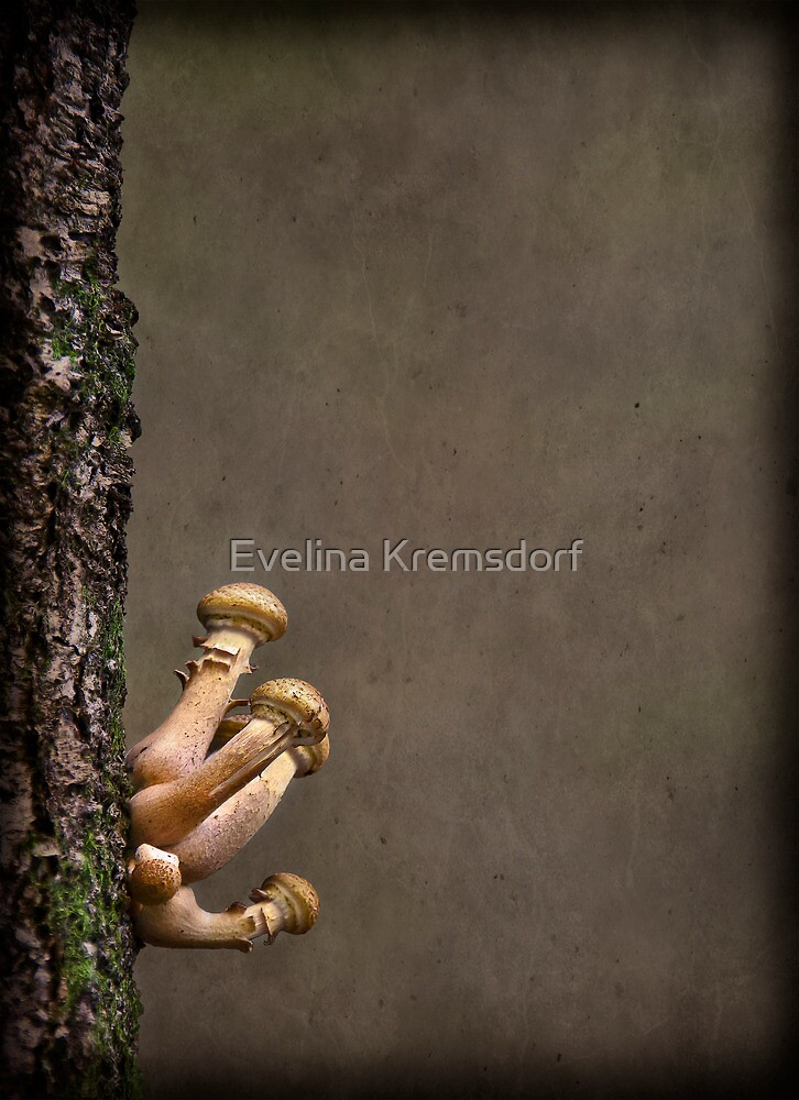 Ties That Bind by Evelina Kremsdorf