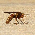 Wasp in Recovery by Dan McKenzie