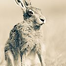 Portrait of a Hare by Peter Denness