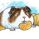 Mandarine von pawlove
