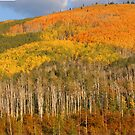 Colorful Colorado by Steve  Taylor