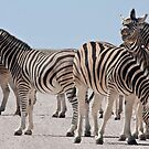 Zebra making faces by Owed To Nature