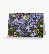 Pretty Blue Daisies Greeting Card