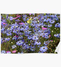 Pretty Blue Daisies Poster