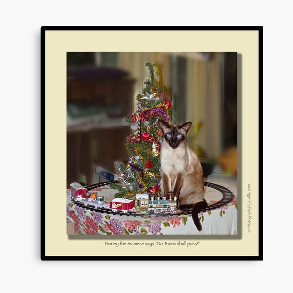 cat calendar #12 Honey for Christmas  Canvas Print