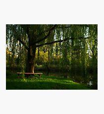 Beneath the Willow Photographic Print