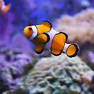 I Found Nemo by Chappy