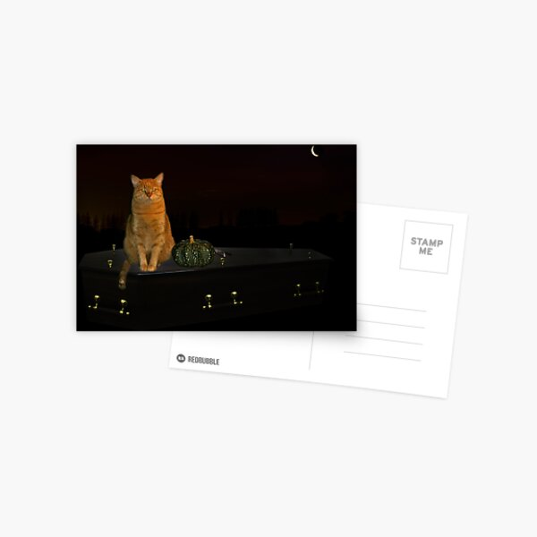 Halloween cat! Postcard