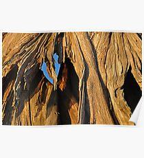 My tree bark Poster