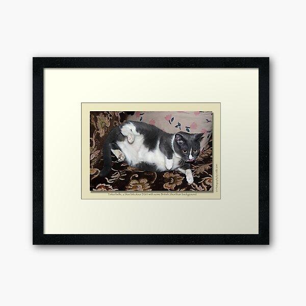 Cat calendar image #3 Tinkerbelle  Framed Art Print