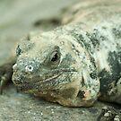 Reptile by vasu