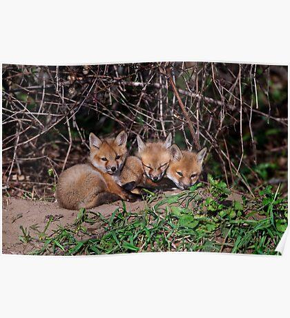 Fox Kits 8 Poster