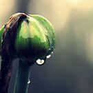 Why does it always rain on Bulbasaur? by Caity H