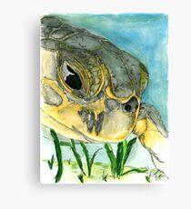 Eeyore the Sea Turtle Canvas Print