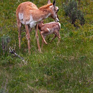 Nursing Antelope   #3576 by JLWoody15Wooden