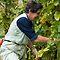 """Harvest in the Vineyard"""
