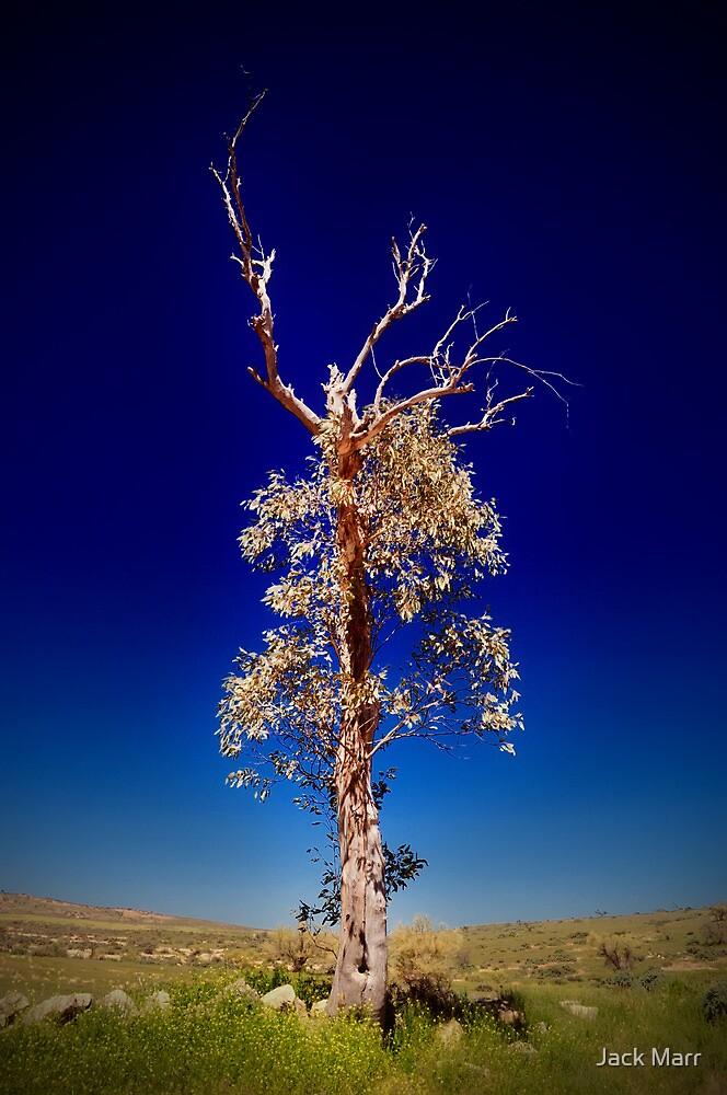 Lonely Tree - Kanyaka Ruins by Jack Marr