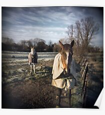 Winter Horses Poster