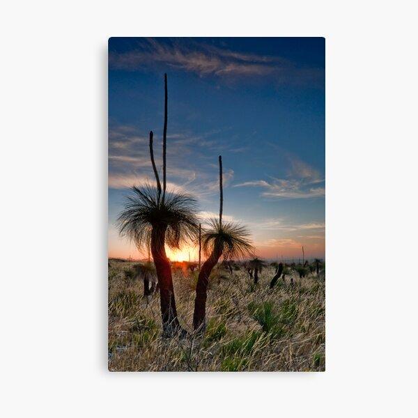Grass Tree Sunset Canvas Print