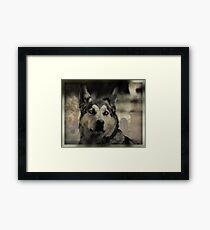 "Happy Birthday to the ""Big Bad Wolf"" Framed Print"