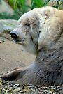 Old Kodiak Bear by Extraordinary Light