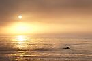 A Surfer In the Mist by annibels