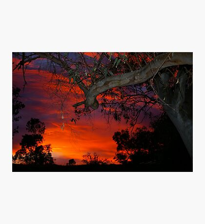 Eucalyptus in sunset Photographic Print