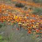 Highway Garden by Rochelle Buckley