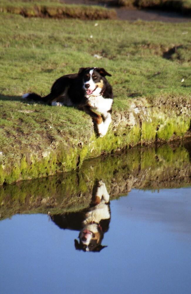 Reflections of Bryn! by Michael Haslam