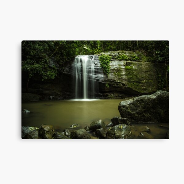 Serenity Falls - Buderim Forest Waterfall Canvas Print