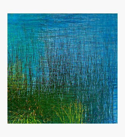 Bed of Reeds Photographic Print
