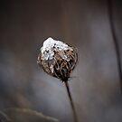 Braving Winter by KerrieLynnPhoto