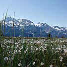 Haines Alaska by KerrieLynnPhoto