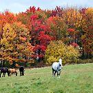 Wellsboro PA by KerrieLynnPhoto