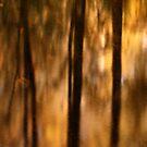 Autumn River Reflections by David Piszczek