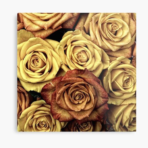 Golden Brown Roses Metal Print
