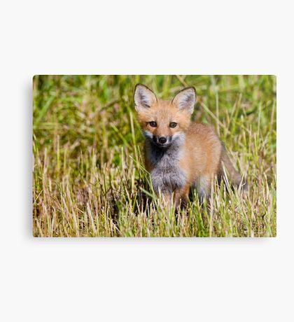 Fox Kit 2 Metal Print