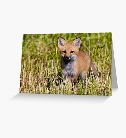 Fox Kit 2 Greeting Card