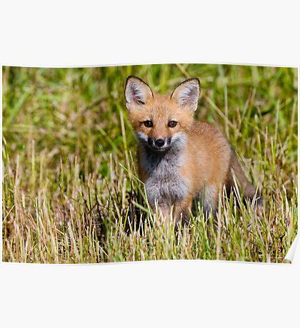 Fox Kit 2 Poster