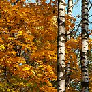 Autumn colors by Andrey Kudinov