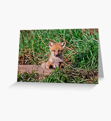 Who can resist this face - Ottawa, Ontario Greeting Card